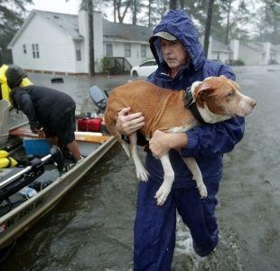 [VIDEO] El conmovedor trabajo de un grupo de rescatistas de animales en medio del huracán Florence