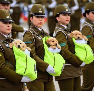 ¡Los más esperados!: Los cachorros que se robaron las miradas en la Parada Militar 2018