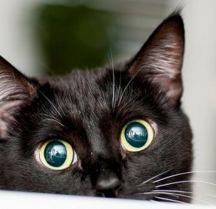 La sorprendente resolución del misterio del asesino de gatos de Londres