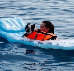 [FOTOS] Balneario se convierte en atractivo turístico para perros y sus dueños