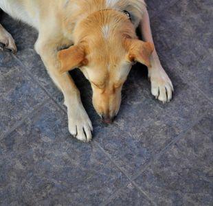 Denuncian brutal maltrato animal: Perro fue atropellado por tren luego de ser atado a las líneas