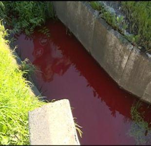 [VIDEO] Alerta por humedal teñido de rojo en Talcahuano