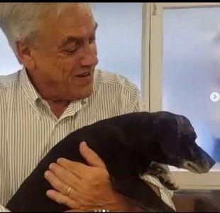 """Píñera lamenta la muerte de""""Cholito"""", el perro que había adoptado"""