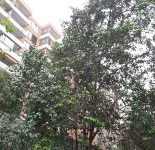 Las Condes: Mujer sube a un árbol en busca de su gato y queda atrapada