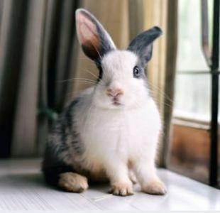 Un asesino serial de conejos tiene en vilo a un pequeño pueblo francés
