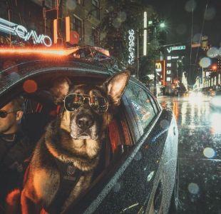 [FOTOS] La unidad canina de la policía de Vancouver realiza inédito calendario