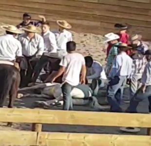 [VIDEO] Investigan caso de maltrato animal en medialuna de Los Andes