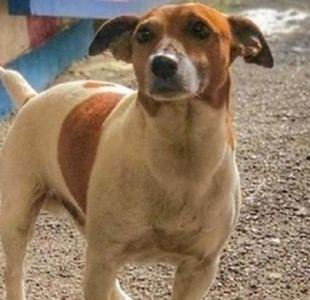 Mafia italiana ofrece recompensa por matar a perro antidroga que los ha hecho perder millones