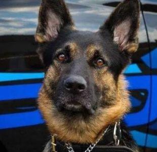 Perro policial