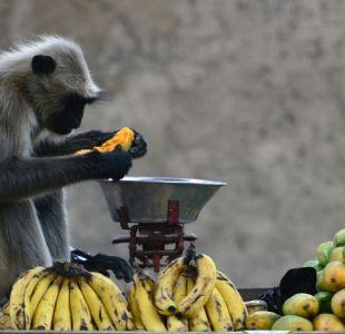 Condenan a tres años de cárcel a una mujer por acoso sexual a un mono