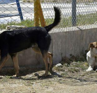 Corea del Sur cierra el mayor matadero de perros