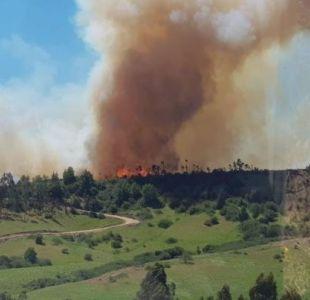 Se mantiene activo incendio forestal en Litueche