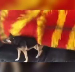 [VIDEO] El tierno video de un perro que aprovechó de acicalarse en un autolavado