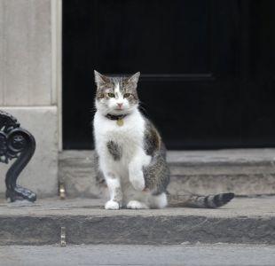 [VIDEO] El gracioso impasse que vivió Larry, el gato que es funcionario de gobierno en Reino Unido