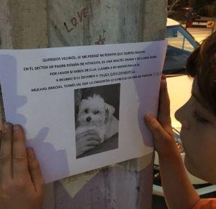 La tierna campaña que realiza niño para encontrar a su perrita: Ofrece pan de pascua y 3 mil pesos