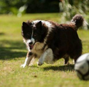 Ciudad China aprueba ley que prohíbe a sus ciudadanos tener más de un perro por familia