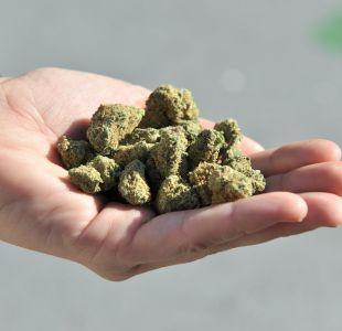 Venta de cannabis legal habría aumentado empleos en Canadá