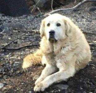 [FOTOS] Un perro espera a sus dueños durante un mes luego de los incendios en California