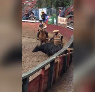 [VIDEO] Primera querella por maltrato animal en rodeo