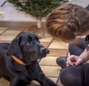 [VIDEO] Experto explica cuáles son los secretos de la crianza en perros de asistencia y terapia