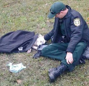 La conmovedora foto de un policía arropando a una perrita herida