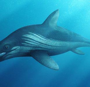 Monstruo marino prehistórico es revelado tras más de 50 años de trabajos científicos