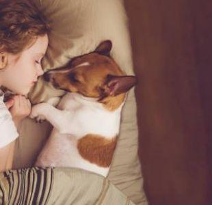 [VIDEO] Los múltiples beneficios que aportan las mascotas a los niños