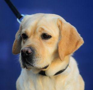 Ley Cholito: se termina el plazo para inscribir mascotas