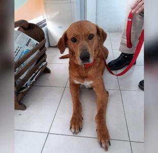 [FOTOS] Familia devuelve perro que adoptaron porque robó comida de una mesa