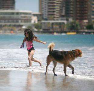 Verano para todos: habilitan playa exclusiva para mascotas en un sector de Santo Domingo