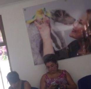 [VIDEO] Polémica por fotos de Cathy Barriga en nueva clínica veterinaria