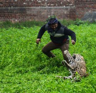 [VIDEO] Un leopardo aterroriza a una ciudad de la India