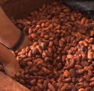 La ruta del chocolate: del árbol a la barra