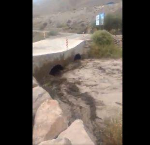 MOP llama a comunidad cercana a Quebrada de Tarapacá a ir a sectores altos por aumento de caudal