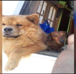 Brutal maltrato animal en Talcahuano