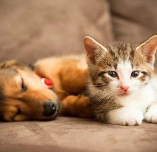 Ley cholito: ¿Habrá multas inmediatas para quienes no inscriban sus mascotas hasta este martes?