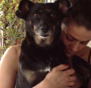 [VIDEO] La emotiva despedida de Tonka a su perrita regalona Benedicta