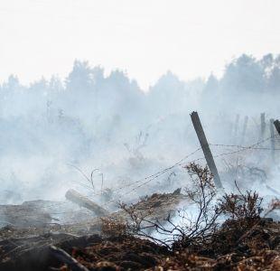 Detienen a cinco hombres por provocar incendio forestal en Ancud