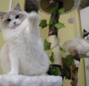 ¡Feliz día del gato! (el primero del año)