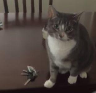 [VIDEO] La reacción de una gata para evitar que su dueña salga de la casa