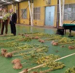 Carabineros de Concepción incautó más de 40 mil dosis de marihuana