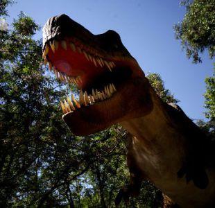 Encuentran huevos de dinosaurio de más de 70 millones de años con embriones dentro