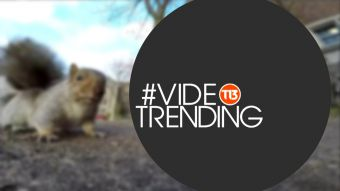 [VIDEO] ¿Conociste a la ardilla ladrona? Estos son los videos de la semana en #VideoTrending