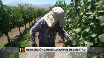 [Reporteros] Reinserción laboral: Campos de libertad