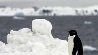 [VIDEO] Tragedia en la Antártida: 150.000 pingüinos mueren por deslizamiento de un iceberg