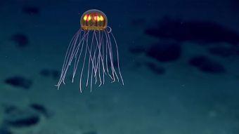 [VIDEO] Captan a una medusa alienígena en el lugar más profundo del planeta