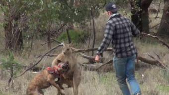 [VIDEO] Hombre pelea con un canguro que tenía a su perro atrapado por el cuello