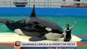[VIDEO] Seaworld cancela su show con orcas de forma definitiva