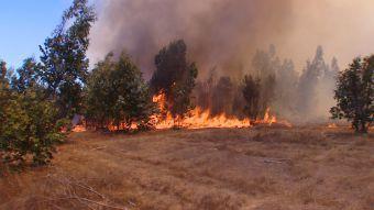 Incendios: Condiciones climáticas propiciarían los siniestros