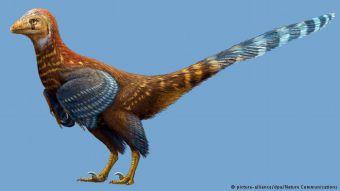 China: descubren fósil de nueva especie de dinosaurio con plumas